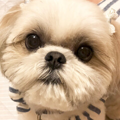 わんこ同好会 愛犬モコ