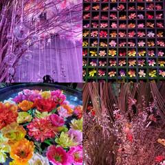 おでかけ/COREDO室町/日本橋三井ホール FLOWERS BY NAKED2020…