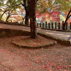 癒し/秋/寺/紅葉 紅葉🍁で癒されました。何とも言えない色の…