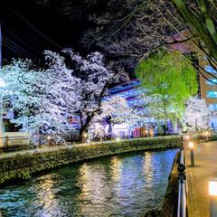 夜桜/広瀬川/川/桜/さくら/地元のオススメ 群馬県前橋市を代表する桜見スポット「広瀬…