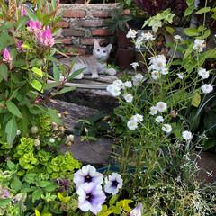 庭 置物の猫ちゃんです
