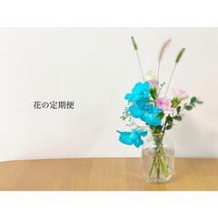 フラワーベース/花の定期便/花のある暮らし/キャンドゥ/ダイソー/セリア/... 今回の花の定期便𓂃 𓈒𓏸𑁍