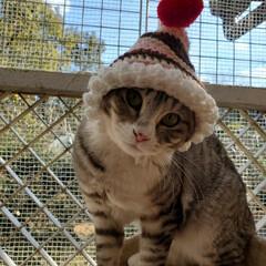 猫小屋/猫と住む家/猫部/猫好き/猫のいる暮らし/猫と暮らす/... とんがりポコポコ帽子を 作って頂きました…