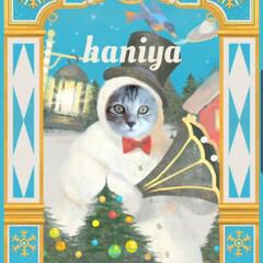 猫との暮らし/猫好き/猫好きさんと繋がりたい/猫のいる暮らし/猫部/ネコ/... おはようございます☀️🐔💓  ガチャガチ…(4枚目)