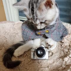 猫ちゃん/猫のいる暮らし/こねこ/ねこ