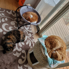 猫との暮らし/猫好き/猫のいる暮らし/猫部/猫と暮らす/ネコ/... 今日は 寒いですね😥 明日はもっと寒いよ…