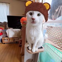 保護猫/猫との暮らし/ねこ