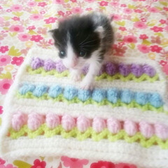 編み物大好き/猫/はちわれ/うちの子ベストショット/保護猫 3女がうちに来た春の日💗