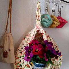 オイル缶/シルバーレース/ビオラ/ガーデニング/花のある暮らし/ガーデン雑貨/... 会社で出る廃材のオイル缶🥫 花を切り戻し…(4枚目)