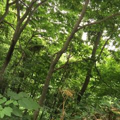 おでかけワンショット。/峠/札幌市内/森林浴/おでかけワンショット おでかけワンショット。 森林浴が出来るく…