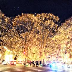 旅の景色/仙台市/冬の観光/光のページェント/旅 旅の景色。 仙台市の冬のイベント、SEN…