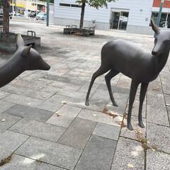朝ドラロケ地/帯広市駅前/鹿のオブジェ/実物大 親子なのかな? 寄り添う鹿のオブジェは、…