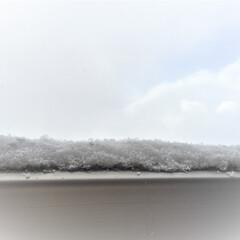 雪/冬の1枚。/丸い粒の雪/冬 冬の1枚。 雪が降ったり止んだり。 発泡…