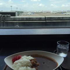 私のご飯/羽田空港/カフェ/飛行機を眺めながら/ビーフカレー/コーヒー/... わたしのご飯。 羽田空港内のカフェで。 …
