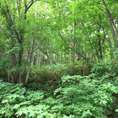 おでかけワンショット。/峠越え/緑いっぱい/札幌市内/おでかけワンショット おでかけワンショット。 札幌市内です。 …