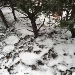 小さい春見つけた/春の雪/風物詩/小さい春 春の雪。 これも春の風物詩です。 北海道…