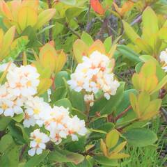 おでかけワンショット/散歩中/道端の花/風景 お出かけ中に見つけたお花。 何という名前…