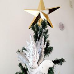 クリスマス/クリスマスツリー/オーナメント/鳩/スター クリスマスツリーの飾りつけ。 ツリートッ…(1枚目)