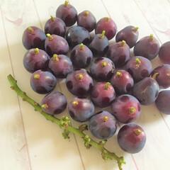 今日の美味しいモノ/ピレーネ/長野県東御市/美味しい/冷凍 今日の美味しいモノ。 大粒の葡萄をいただ…