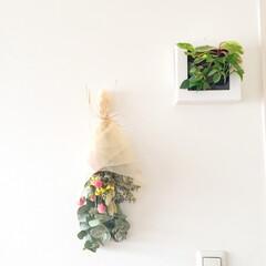 おうち自慢/壁/グリーン/お気に入りのコーナー/おうち おうち自慢。 壁に飾ったグリーンをパチリ…