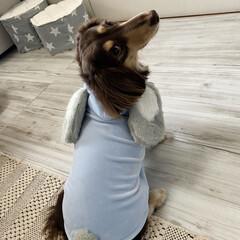 「3coinsで買ったお洋服🐰 可愛すぎる💕」(4枚目)