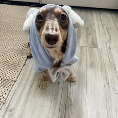 「3coinsで買ったお洋服🐰 可愛すぎる💕」(2枚目)