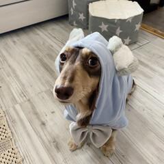 「3coinsで買ったお洋服🐰 可愛すぎる💕」(1枚目)
