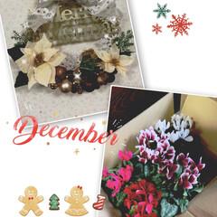 頂き物/ガーデンシクラメン/クリスマスリース/クリスマス2019/ダイソー/セリア/... こんにちは😃  またまたまたクリスマスリ…