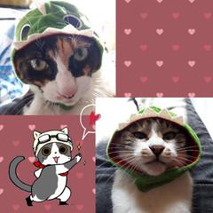 猫と暮らす 実家の猫に被り物(笑) 母親と大爆笑です…