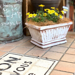 naturalgarden/ガーデニングインテリア/庭づくり/ガーデニング/花/DIY/... サントリーフラワーズさんのビーダンスも植…