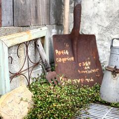 庭のある暮らし/グリーンのある暮らし/ワイヤープランツ/サビサビ/ガーデニング手作り/ガーデン雑貨/... 根元まで刈り込んだワイヤープランツがいい…
