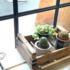 グリーンのある暮らし/窓辺のディスプレイ/窓辺で育つ植物/窓辺/サボテン/DIY/... いつも行ってる美容院の窓辺のサボテンがか…