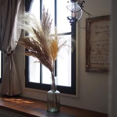 フェイクグリーン飾り方/ドライフラワーのある暮らし/ドライフラワー/フェイクグリーン/いなざうるす屋/いなざうるす/... いなざうるす屋さんのパンパスグラスのフェ…