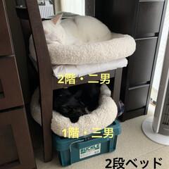 ドレッサーチェア/工具箱/黒猫/白猫/クッション/2段ベッド/... 2段ベッドに寝ている我が家のニャンコ、二…