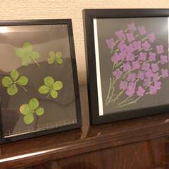 紫陽花/息子の絵/ハッピー/四つ葉のクローバー 今日のお散歩でもまた 四つ葉のお土産🍀 …