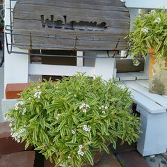 ガーデニング 今日の花たち♪(4枚目)