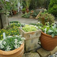 ガーデニング 今日の我が家の庭🎵  孫と竹灯り作ります~