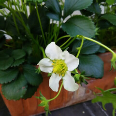 ガーデニング 今日の庭に咲く花♪(6枚目)