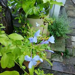 ガーデニング/今日は快晴、 今日の庭の花🎵  今日の天気は快晴、 主…