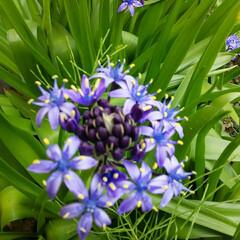 ガーデニング キレイな花、発見~  会社での昼休み、 …