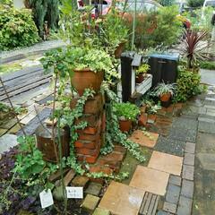ガーデニング 今日の庭🎵(1枚目)
