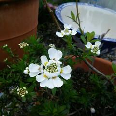 ガーデニング 今日の庭に咲く花♪(5枚目)