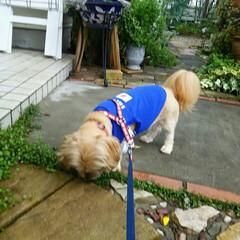 ワンちゃん モカも梅雨で散歩に困っています🎵