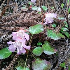 山登り 今日の山で出会った花🎵 今日登った山は秘…