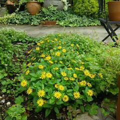 ガーデニング 今朝の庭🎵 梅雨で湿度100%、 家のな…