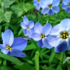 ガーデニング 今日の庭に咲く花♪(2枚目)