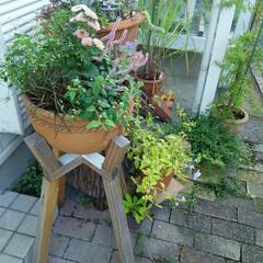 ガーデニング 今朝の庭🎵 今日は朝から快晴 、 太陽と…