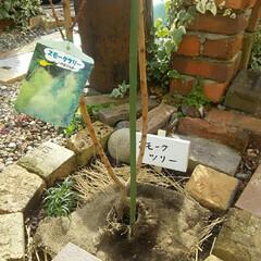 ガーデニング 植栽完了  ホームセンターで腐葉土、たい…