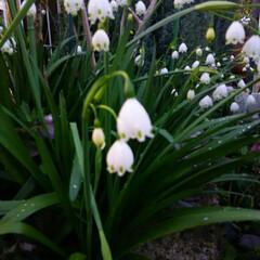 ガーデニング 今日の庭に咲く花♪(4枚目)