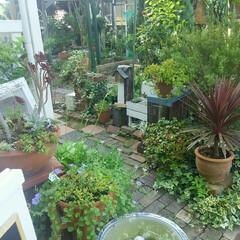 ガーデニング 今朝の庭🎵 今日は快晴、風もさわやか~